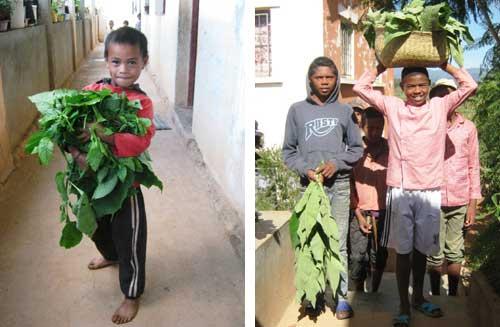 Ramassage des feuilles par les élèves de l'école Akany Aina à Madagascar
