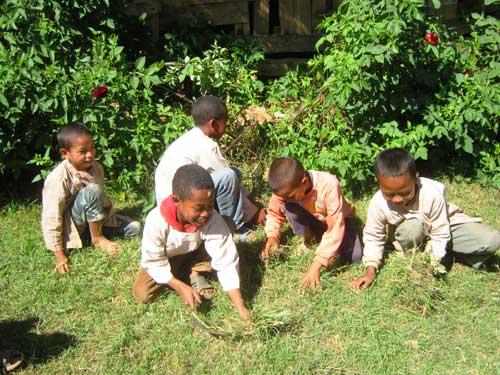 Nettoyage des pelouses et ramassage de l'herbe par les élèves de l'école Akany Aina à Madagascar