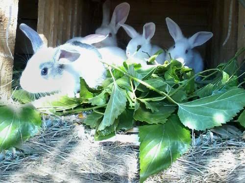 Elevage de lapins dans la ferme du centre Akany Aina à Ambatolampy, Madagascar