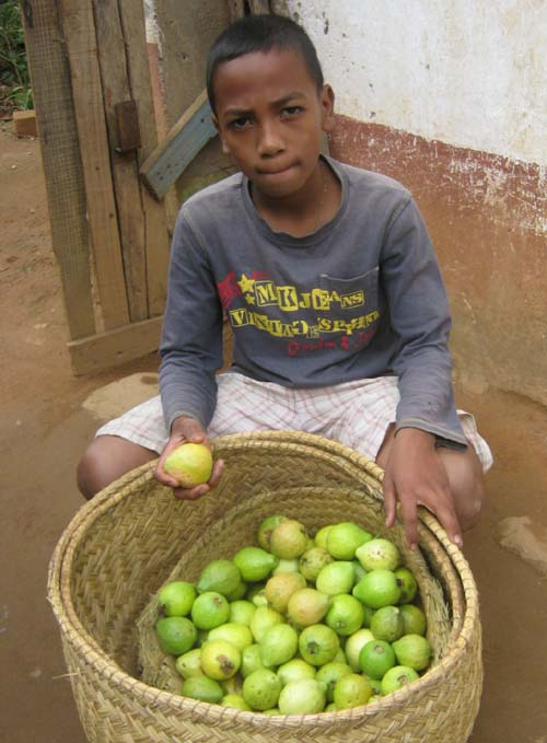 Des goyaves pour les élèves de l'école Akany Aina d'Ambatolampy à Madagascar
