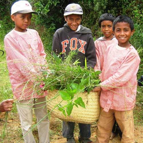 Séance de jardinage pour nos enfants de Madagascar