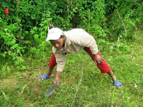 Petit jardinier, jeune élève apportant son aide dans la ferme du centre Akany Aina à Ambatolampy, Madagascar