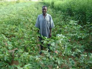 Champ de coton à Guiè, Burkina Faso