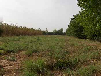 Champs expérimentaux résistant à la sécheresse à Guiè, Burkina Faso