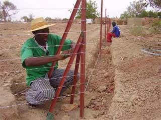 Unbe nouvelle technique de clôture à Guiè, Burkina Faso