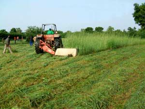 Ensilage d'herbe pour la section élevage à Guiè, Burkina Faso