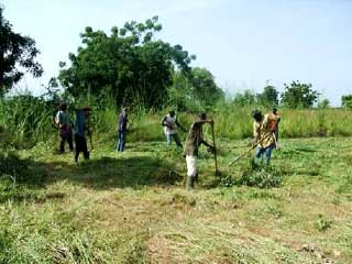 Ensilage à Guiè, Burkina Faso