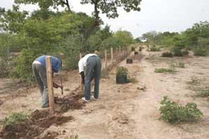 Plantation de la haie vive