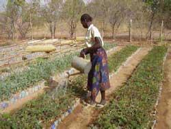 Arrosage des plants à la pépinière de Guiè, Burkina Faso