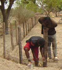 Pose des piquets de clôture