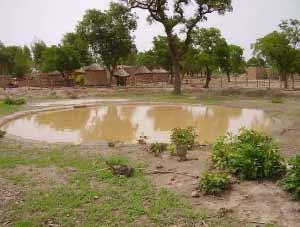 Pluvométrie insuffisante en 2006 au Sahel, Guiè, Burkina Faso