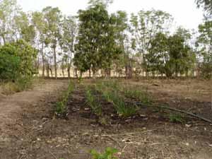 Aménagement de jardins pluviaux à domicile, Guiè, Burkina Faso