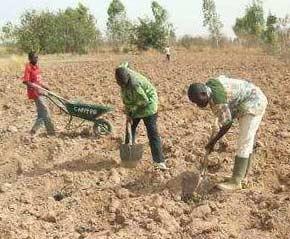 Préparation des trous pour les plantations selon la méthode Zaï