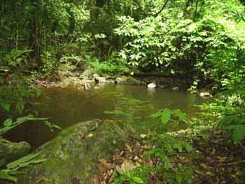 Les pygm�es Bagyeli et la for�t