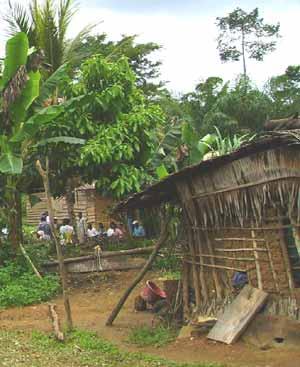 Campements Pygm�es et semi-s�dentarisation