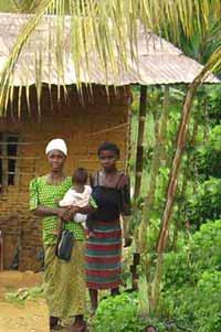 Les habitudes alimentaires des Pygm�es Bagyeli