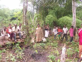 Défrichage d'un champ communautaire par la population Pygmée de Bipindi