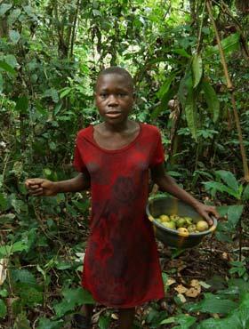 Cueillette des mangues sauvages dans un campement pygmée au Cameroun
