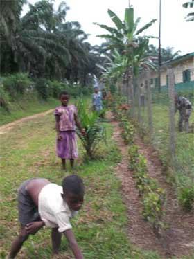 Entretien de la haie par les enfants Pygmées de la famille des Agneaux, Bipindi, Cameroun