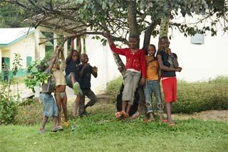 Cueillette des pamplemousses au Cameroun