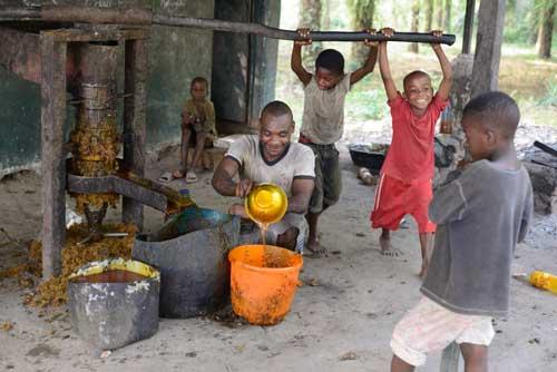 Pressage de l'huile des noix de la palmeraie du Fondaf au Cameroun