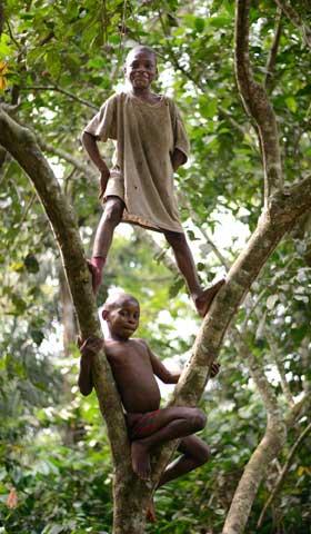 Les enfants Pygmées Bagyeli adorent grimper dans les arbres de leur forêt