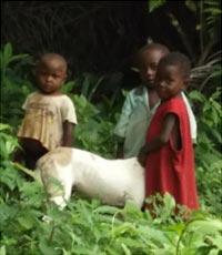 Enfants Pygmées jouant dans la forêt au Cameroun