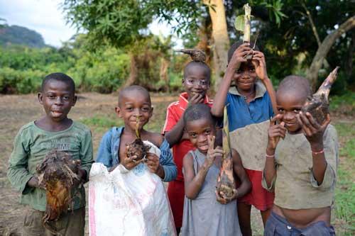 Au Cameroun, les enfants Pygmées Bagyeli ont préparé les rejets de bananiers pour le replanter