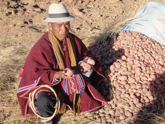 Distribution de semailles de pommes de terre à Ch'alla,en Bolivie