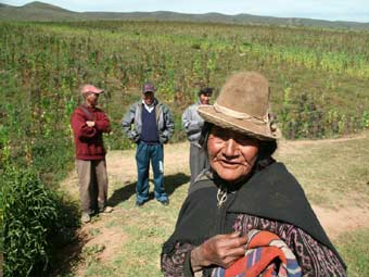 Culture du quinoa en Bolivie