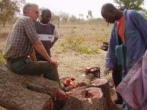 ormation des bûcherons élagueurs à Guiè, Burkina Faso