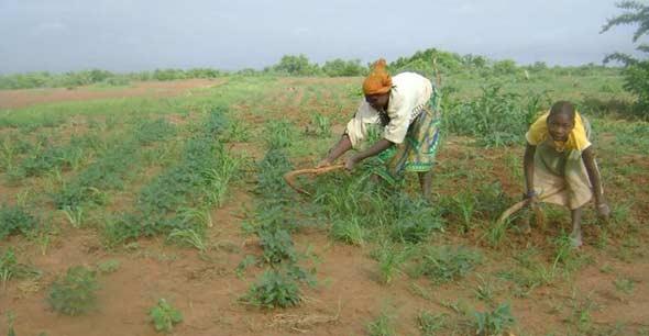 Femmes cultivant leur champ, Ferme Pilote de Goèma, Burkina Faso