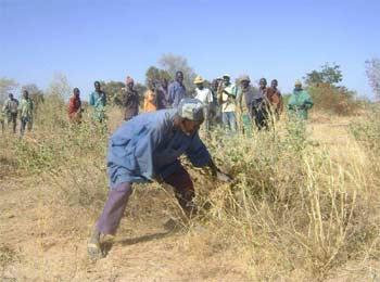 Défrichage d'un champ, Ferme Pilote de Goéma, Burkina Faso