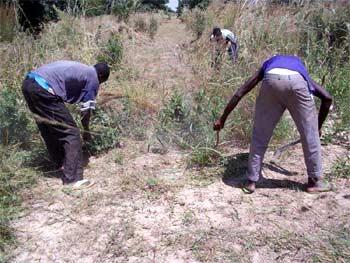 Défrichage du périmètre bocager Neerwaya, Ferme Pilote de Goèma, Burkina Faso