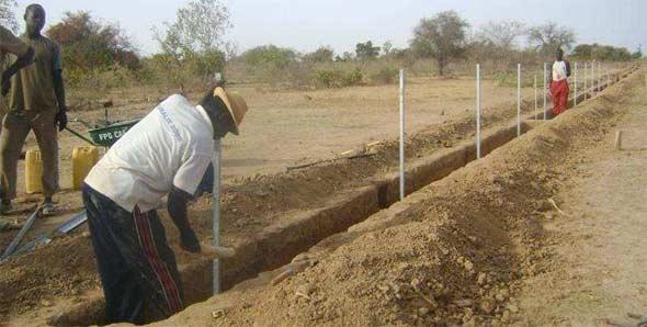 Plantation des piquets de clôture, Ferme Pilote de Goèma, Burkina Faso