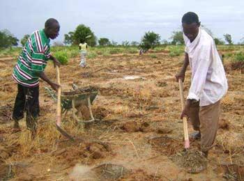 Méthode Zaï, creusage des trous, Ferme Pilote de Goèma, Burkina Faso