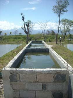 Trois bassins b�tonn�s pour la reproduction des tilapias