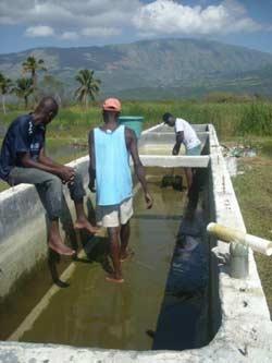 Entretien des petits bassins de reproduction des tilapias