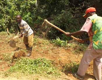 Travaux de défrichage de la route et du terrain pour la construction du village de Kabweke, Nord Kivu en RD Congo