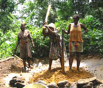 Production artisanale d'huile de palme en Afrique