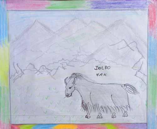 Dessin d'un yak dans un paysage du Haut-Dolpo au Népal