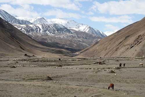 Les champs de TingKyu au Dolpo, Népal