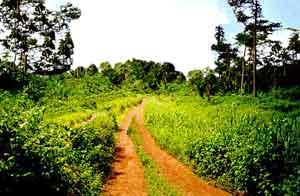 Nkolnguet est situé à 1 heure de piste de Yaoundé