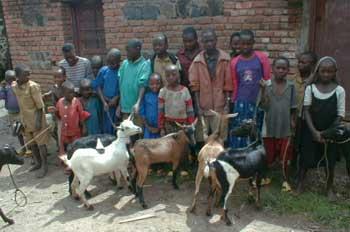 Donner une chèvre en cadeau humanitaire