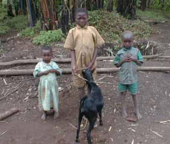 Acheter une chèvre pour un orphelin du sida
