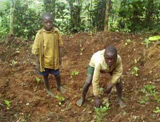 Des jardins potagers pour améliorer l'alimentation des orphelins du sida