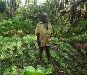Des jardins potagers pour la sécurité alimentaire des orphelins du sida