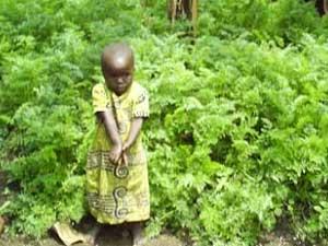 jeune orpheline dans son champ de carottes