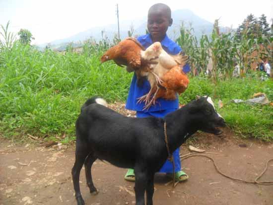 Orpheline du sida avec sa chèvre et ses poules