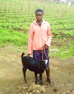 Dons de chèvres pour la survie des oprhelins du Sida au Rwanda